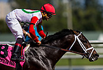 HALLANDALE BEACH, FL - JANUARY 27: Tommy Macho #8 with Luis Saez up defeats Conquest Big E #3 and Juan Bautista aboard breaks his maiden at Gulfstream Park Race Track on January 27, 2018 in Hallandale Beach, Florida. (Photo by Alex Evers/Eclipse Sportswire/Getty Images)