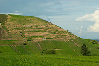 vineyard sommerberg grand cru niedermorschwihr alsace france