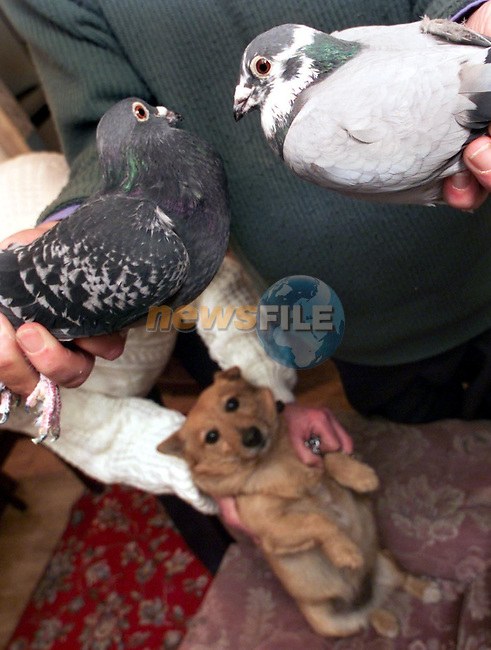 Fido the dog with the parents of 'Hard Luck' the pigeon..Picture: Paul Mohan/Newsfile