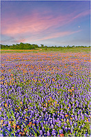 The sun sets  over a Texas wildflower field of bluebonnets and paintbrush near Whitehall Texas in this springtime picture.