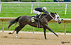 Artic Bird winning at Delaware Park on 8/20/14
