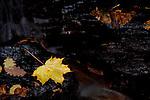 Europa, DEU, Deutschland, Baden-Wuerttemberg, Odenwald, Neckargerach , Naturpark Neckartal-Odenwald, Herbst, Margarethenschlucht, Wasserfall, Blaetter, Kategorien und Themen, Natur, Umwelt, Landschaft, Jahreszeiten, Stimmungen, Landschaftsfotografie, Landschaften, Landschaftsphoto, Landschaftsphotographie, Tourismus, Touristik, Touristisch, Touristisches, Urlaub, Reisen, Reisen, Ferien, Urlaubsreise, Freizeit, Reise, Reiseziele, Ferienziele<br /> <br /> [Fuer die Nutzung gelten die jeweils gueltigen Allgemeinen Liefer-und Geschaeftsbedingungen. Nutzung nur gegen Verwendungsmeldung und Nachweis. Download der AGB unter http://www.image-box.com oder werden auf Anfrage zugesendet. Freigabe ist vorher erforderlich. Jede Nutzung des Fotos ist honorarpflichtig gemaess derzeit gueltiger MFM Liste - Kontakt, Uwe Schmid-Fotografie, Duisburg, Tel. (+49).2065.677997, archiv@image-box.com, www.image-box.com]