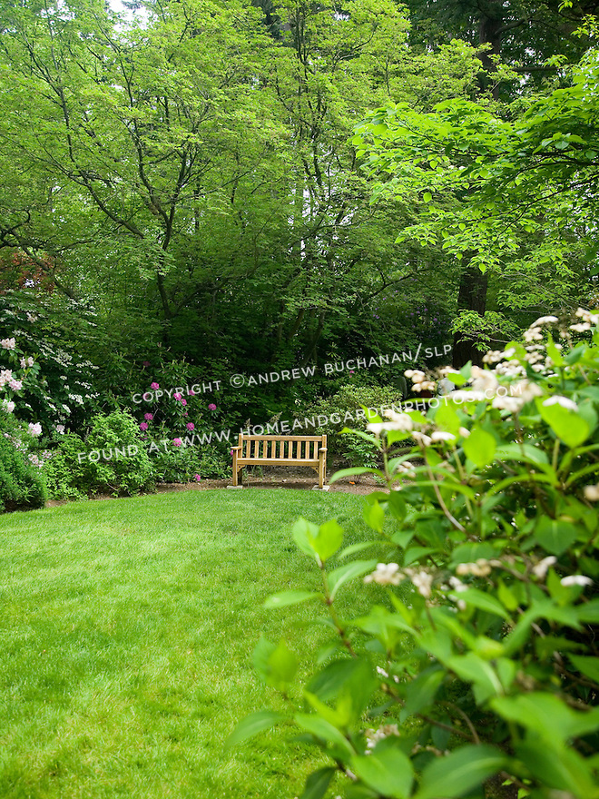 A single wooden bench sits at the edge of a manicured green lawn underneath the spreading branches of a Japanese maple and a woodland understory of blooming rhododendrons at the Dunn Gardens, a former private estate near Seattle now run as a woodland botanical garden and available for touring by appointment and fee.