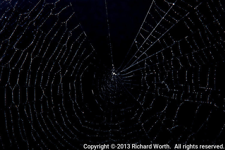 A spider web with water droplets against a black background.