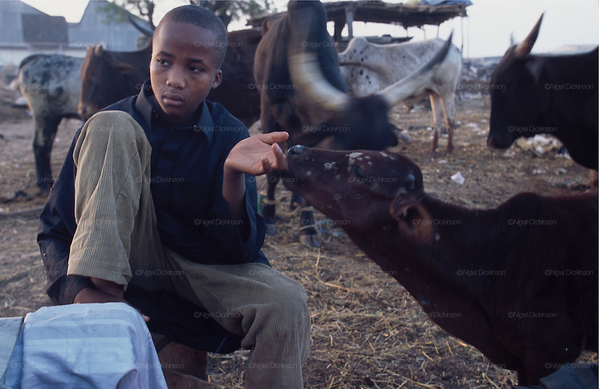 Africa, Nigeria, Kano State, Kano. Boys working in the abattoir and markets. 2003.'MEAT' across the World..foto © Nigel Dickinson