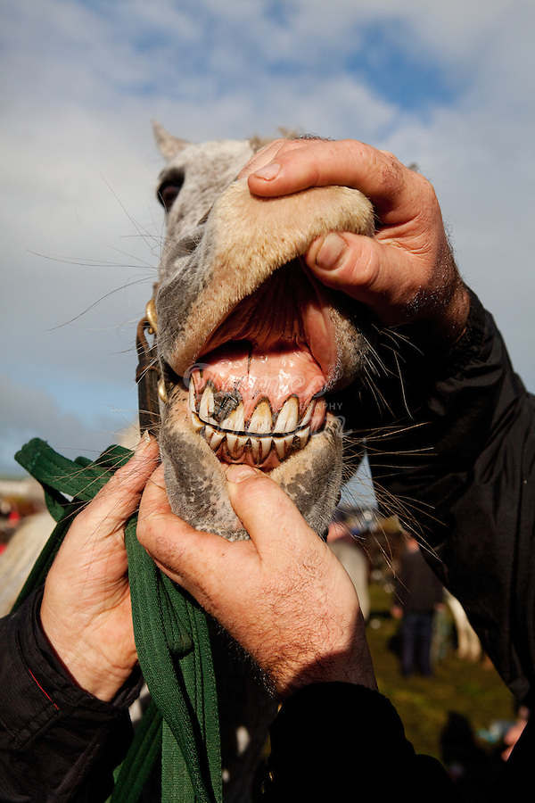 3/10/2010.  A horse trader is pictured showing his horses teeth at the Ballinasloe Horse Fair, Ballinasloe, County Galway, Ireland. Picture James Horan