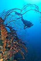 Divemaster Nick exploring the edge of the drop off at Bob's Bluff near Annaly Bay, St. Croix, USVI