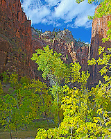 Fall colors, red canyon, blue sky, Zion National Park