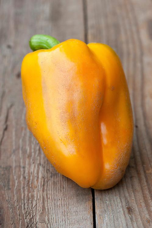 Sweet pepper 'Golda', mid October.