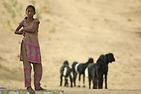 Young Girl and Goats from a Traditional Villages near Manvar on the way to Jaisalmer, Rajasthan India