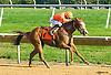 Megan's Muse winning at Delaware Park on 10/13/16