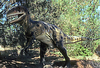 Pre-historic Animals: Allosaurus--predator, Jurassic, 135 million years ago. Ht., 16.5 ft.: Wt., up to 4 tons. Found--mostly Utah.  DYNAMATION Inc.