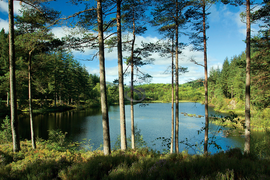 Walking through Loch Ard Forest beside Lochan a' Ghleannain, Loch Lomond and the Trossachs National Park, Stirlingshire