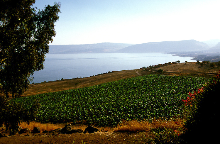 Israel: Sea of Galilee, north end. photo: israel103 .Photo copyright Lee Foster, www.fostertravel.com , 510/549-2202, lee@fostertravel.com