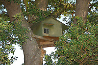 Owl box in an oak tree.