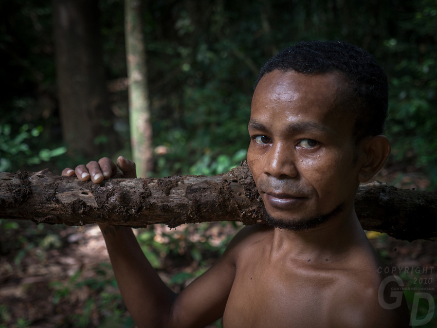 A tribal Aeta from this specific part of the Philippines collecting fire wood in the Jungle, the Aetas are famous for their survival skills and have trained the US Armed forces in the past, Pampanga, Philippines