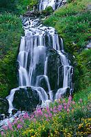 Fireweed and seep spring arnica<br /> Vidae Falls,  Rim Drive<br /> Crater Lake National Park<br /> Cascade Range,  Oregon