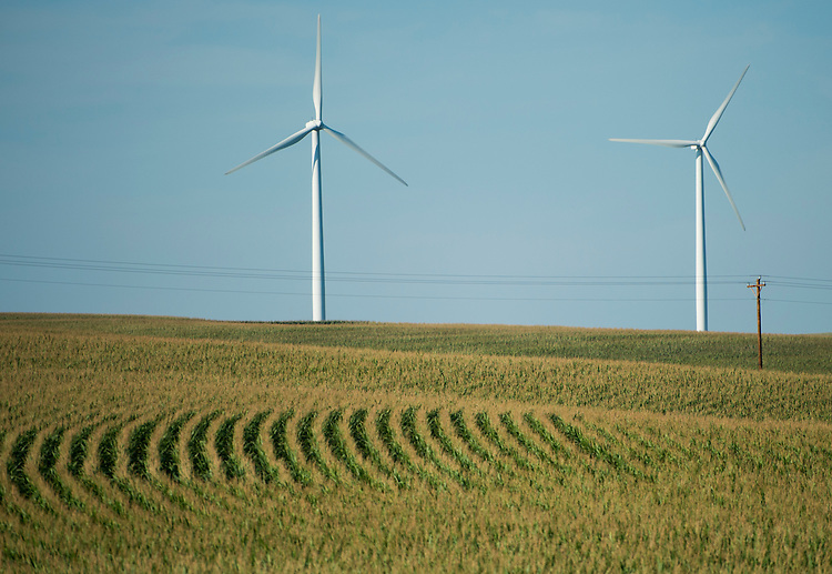 UNITED STATES – AUGUST 26: Wind turbines spin above corn fields near Carroll, Iowa on Monday, Aug. 26, 2013. (Photo by Bill Clark/CQ Roll Call)