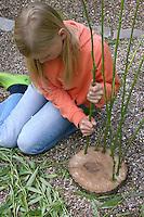 Mädchen flechtet, flicht aus Weidenzweigen einen Korb im Garten, Weide, Weiden, Basteln, Bastelei, Weidenkorb. 3. Schritt: Weidenzweige werden in die Löcher am Rand einer Holzscheibe gesteckt