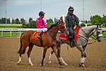 TORONT,CANADA-SEP 15: Secret Stash is before the Natalma Stakes at Woodbine Race Track on September 15,2019 in Toronto,Ontario,Canada. Kaz Ishida/Eclipse Sportswire/CSM