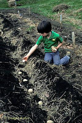 HS05-016z  Potato - child planting potatoes, kennebec variety