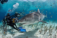 pk11454-D. Tiger Shark (Galeocerdo cuvier) and scuba diver (model released). Bahamas, Atlantic Ocean..Photo Copyright © Brandon Cole. All rights reserved worldwide.  www.brandoncole.com..This photo is NOT free. It is NOT in the public domain. This photo is a Copyrighted Work, registered with the US Copyright Office. .Rights to reproduction of photograph granted only upon payment in full of agreed upon licensing fee. Any use of this photo prior to such payment is an infringement of copyright and punishable by fines up to  $150,000 USD...Brandon Cole.MARINE PHOTOGRAPHY.http://www.brandoncole.com.email: brandoncole@msn.com.4917 N. Boeing Rd..Spokane Valley, WA  99206  USA.tel: 509-535-3489