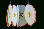 Slice of apple.  Multiple exposure.  Action image.