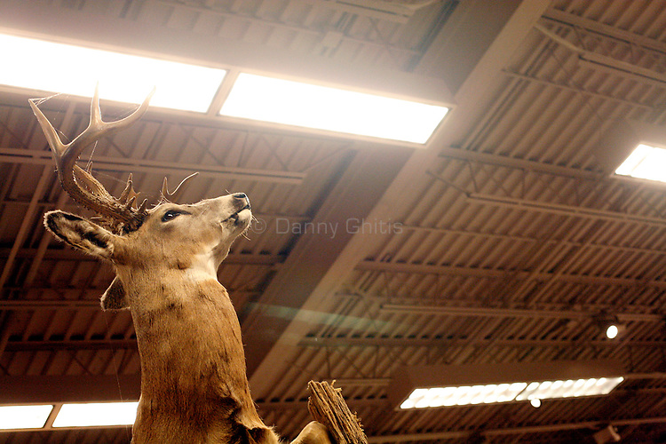 Images of taxidermy on Black Friday.