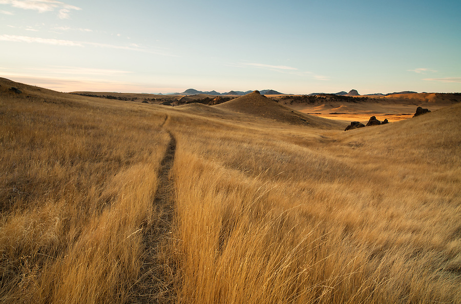 A narrow path through the prairie grass is seen in the warm dawn light from the perspective of a hiker in Central Montana (Cascade County).