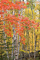 Fall color at Pictured Rocks National Lakeshore in Munising Michigan.
