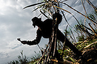 A worker cuts sugar cane on a plantation near Florida, Valle del Cauca, Colombia, 25 May 2012. The Cauca River valley is the booming centre of agriculture and sugar cane cultivation in Colombia. Although the main part of the crop is still refined into a sugar, the global demand of biofuel and ethanol has intensified the sugar cane production in the last years. 85 percent of Colombia's cane crop is still harvested the manual way, employing approximately 30,000 workers. Working six days a week, under harsch labor conditions, the sugar cane cutters earn $4 for every ton of cane they cut, with no access to social benefits due to the tricky system of intermediary contractors and cooperatives.