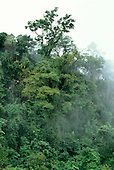 Amazon, Brazil. Cloudy rainforest with tall trees and lianas.