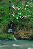 Lee Creek and flowering dogwood<br />