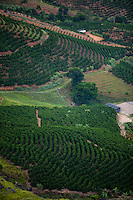 Venda Nova do Imigrante_ES, Brasil...Plantacao de cafe em Venda Nova do Imigrante...Coffee plantation in Venda Nova do Imigrante...Foto: LEO DRUMOND / NITRO