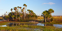 Early morning view of scenery in Orlando Wetlands Park in central Florida