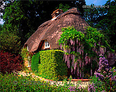 Tom Mackie, FLOWERS, photos, Thatched Cottage & Wysteria, Minstead, Hampshire, England, GBTM980696-2,#F# Garten, jardín