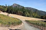 Bay Area Upland Habitat, CA