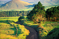 Beautiful Mana Road