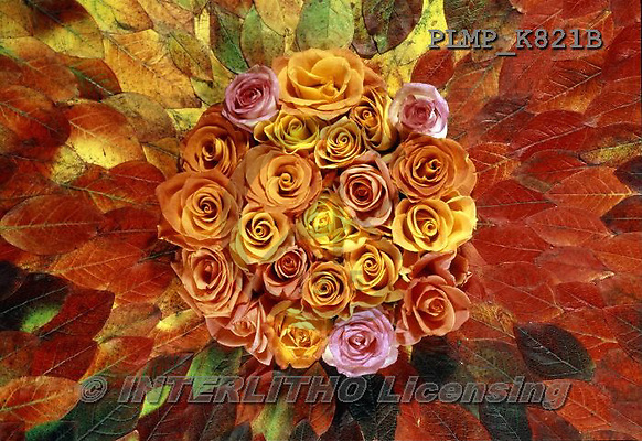 Marek, FLOWERS, BLUMEN, FLORES, photos+++++,PLMPK821B,#f#