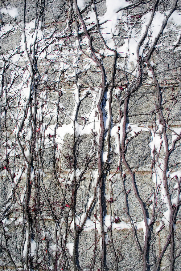 Snowy textured vines climbing wall