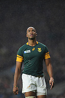 JP Pietersen of South Africa looks on during the Semi Final of the Rugby World Cup 2015 between South Africa and New Zealand - 24/10/2015 - Twickenham Stadium, London<br /> Mandatory Credit: Rob Munro/Stewart Communications