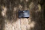 Tree species identification label, National arboretum, Westonbirt arboretum, Gloucestershire, England, UK - Western hemlock, Tsuga heterophylla