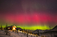 The northern lights burst into a colorful display over the Caribou Bluff cabin, during a night of high aurora activity in the White Mountains Recreation Area in Alaska's interior. March 17, 2013