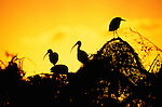 Silhouetted birds in Everglades National Park