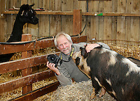 John Daniels, animal photographer, working with pigs whilst a lama look on, Fishers Farm Park, Wisborough Green, West Sussex