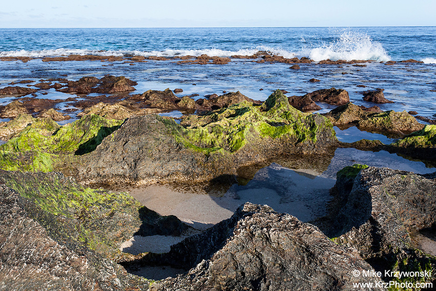 Jagged rocks covered with green algae at low tide near the shoreline at Keiki Beach, North Shore, O'ahu