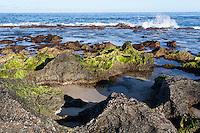 Jagged rocks covered with green algae at low tide near the shoreline at Keiki Beach, North Shore, O'ahu