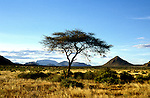 Kenya East Africa, Samburu, scenic landscape, acacia tree, weaver bird nests  .Photo copyright: Lee Foster, www.fostertravel.com, photo kenyas101, 510-549-2202, lee@fostertravel.com