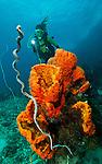 diver looking at orange sponges
