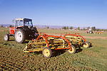 1989 Massey-Furguson 390 tractors with swather-rakes in cut alfalfa field, Mojave Valley, Arizona